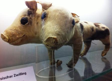 World's Largest Pig Museum: One of the Quirkiest Museums in Stuttgart